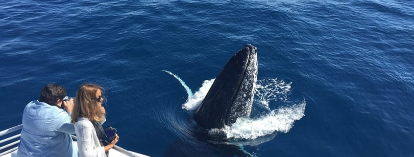Whale Watching Season Hervey Bay - Whale Watching Tours Queensland