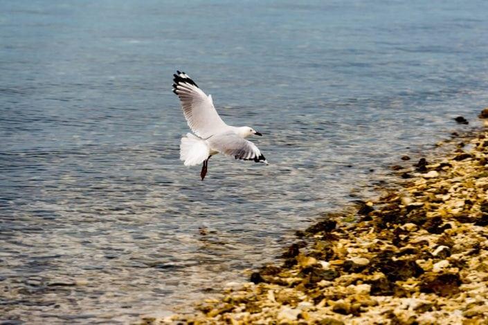 Bird Watching Lady Musgrave Experience - Rare Exotic Bird Watching Tours