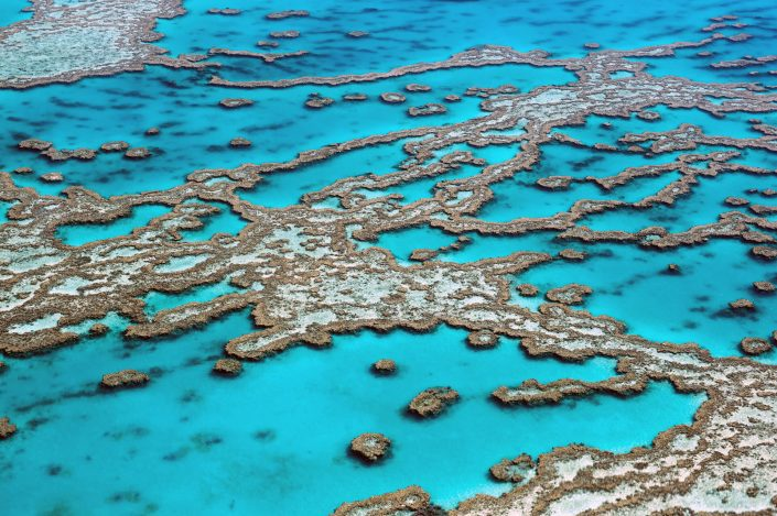 coral southern great barrier reef
