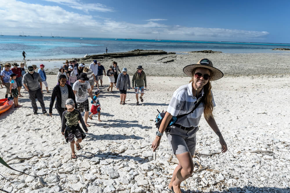 guided lady musgrave island tours