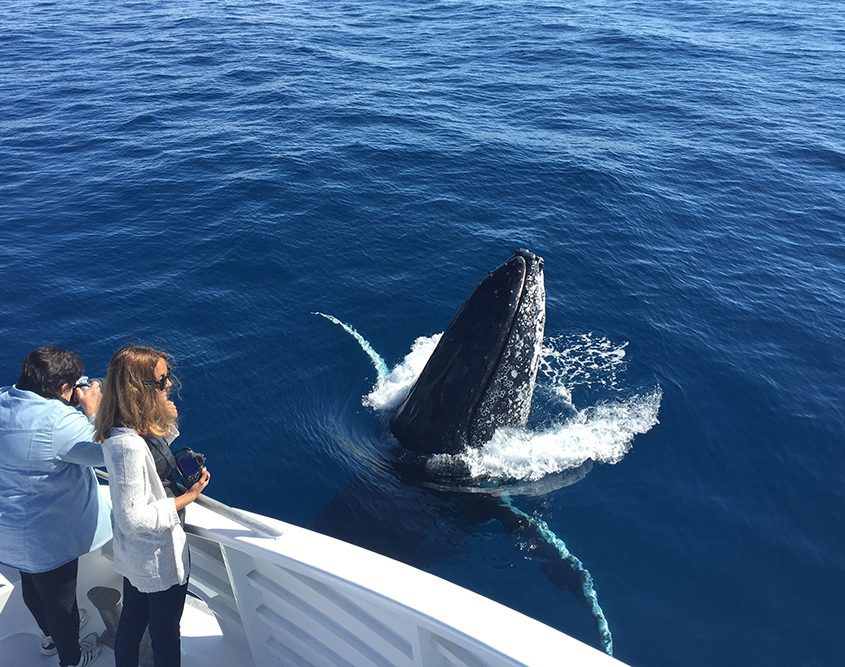 natures calendar lady musgrave island june events