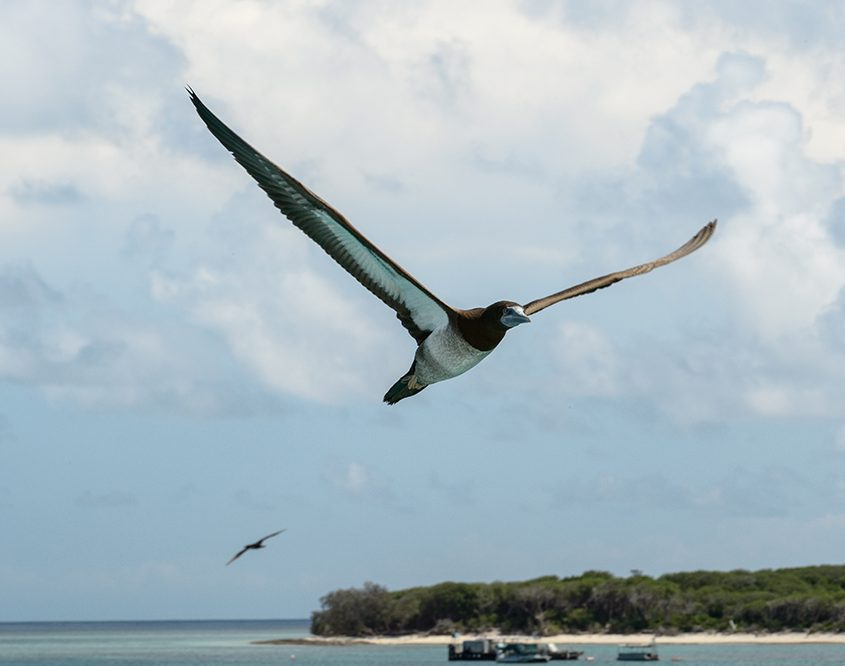 natures calendar lady musgrave island march events