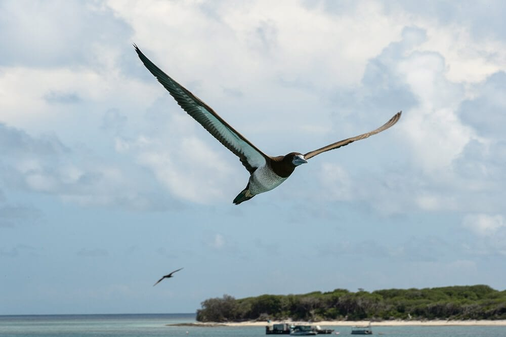 beautiful birds of the great barrier reef