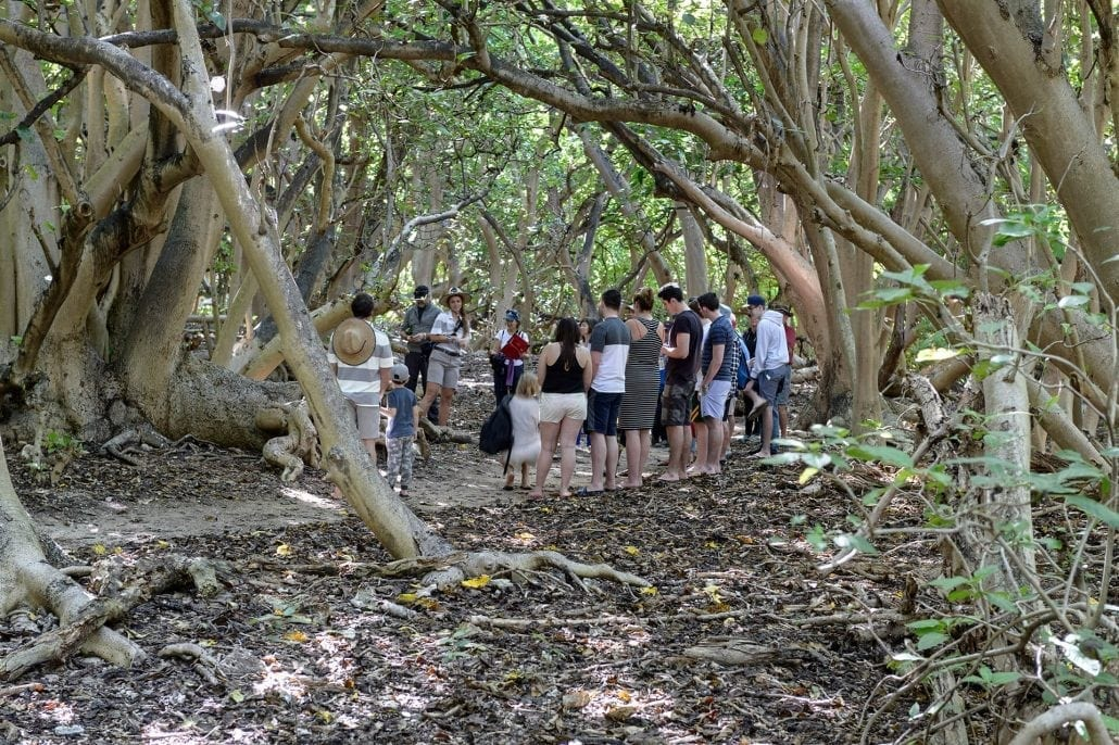 Guided Island Walks Great Barrier Reef Day Tours - Lady Musgrave Island Tour Group