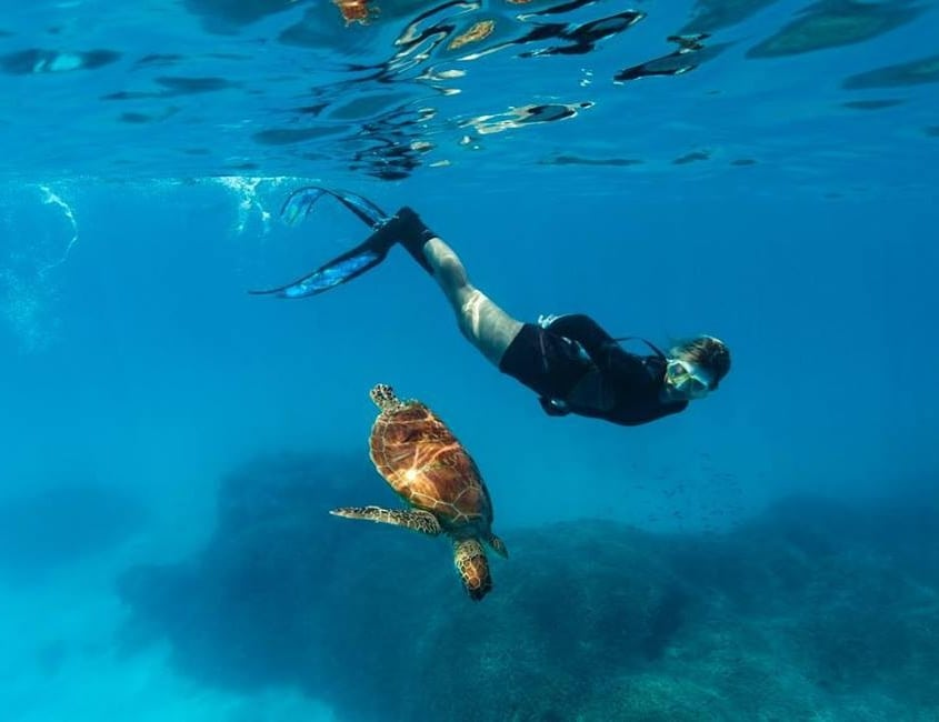 Lady Musgrave Experience Crew - Swimming With Sea Turtles, Great Barrier Reef