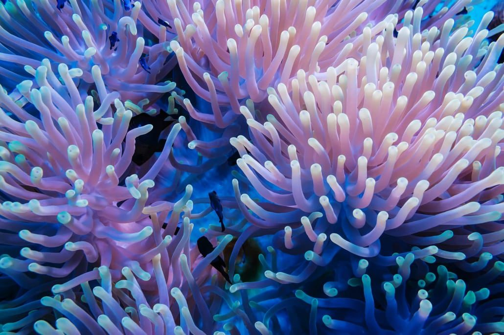 Soft Coral Great Barrier Reef - Learn more about soft corals