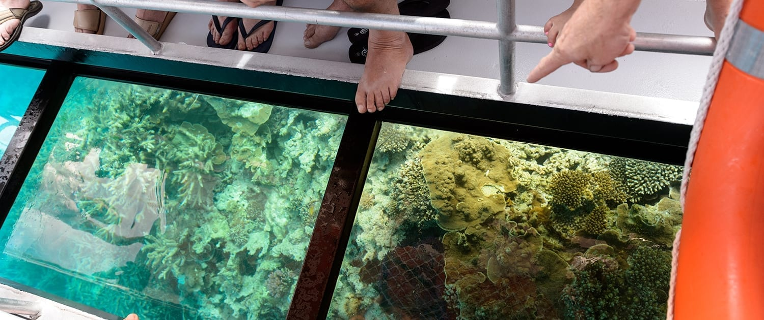 Glass Bottom Boat Lady Musgrave Experience Great Barrier Reef Tours