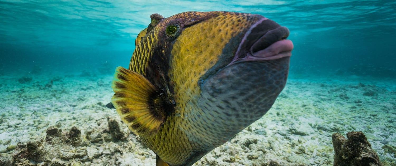 natures calendar great barrier reef