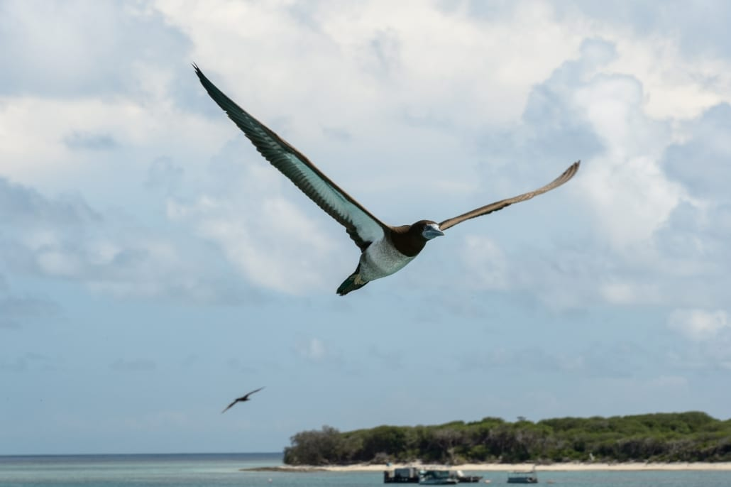 Bird Watching 2 Lady Musgrave Experience Great Barrier Reef