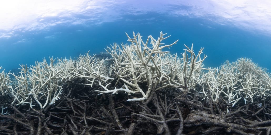 Coral Bleaching 5 Environment Lady Musgrave Experience Great Barrier Reef