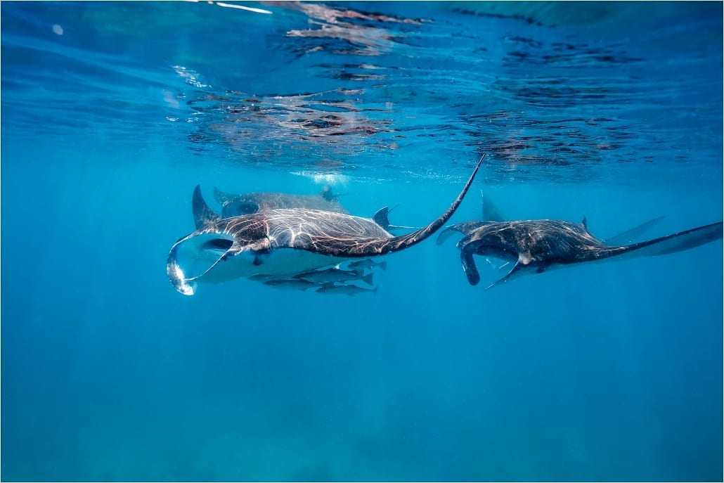 Manta Ray Lady Musgrave Experience Great Barrier Reef QLD