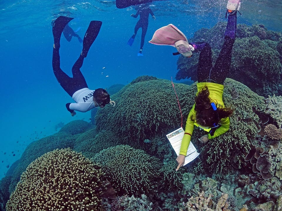 Reef Facts 1 Reef Education Marine Bio Lady Musgrave Experience Great Barrier Reef
