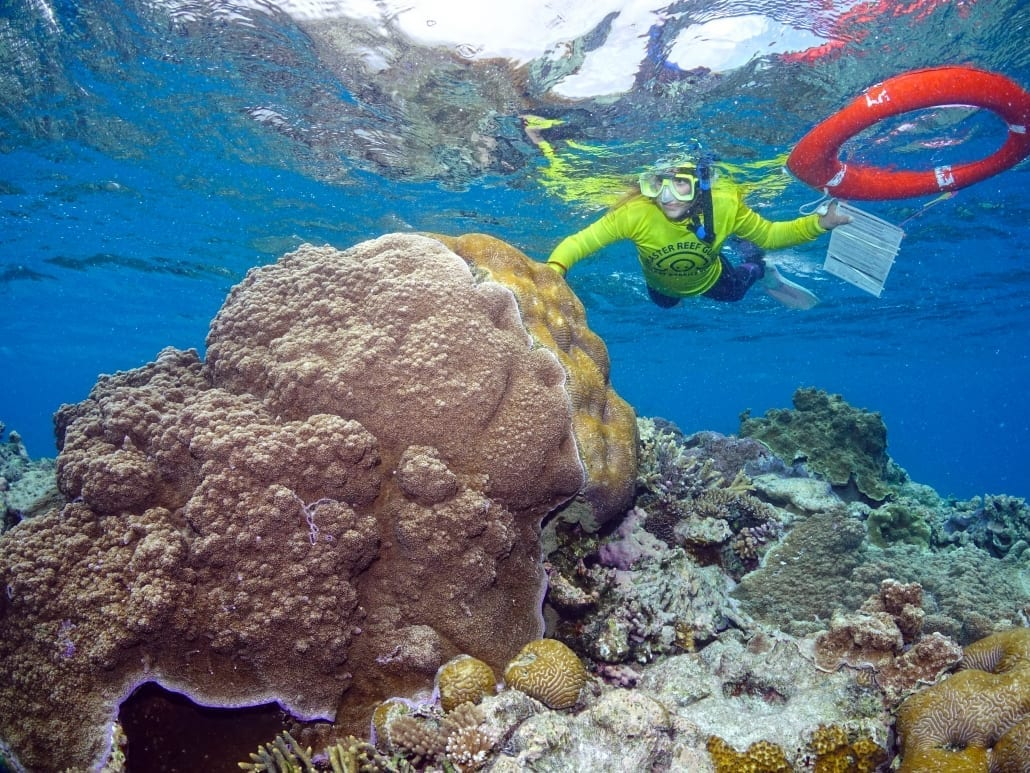 Reef Facts 3 Reef Education Marine Bio Lady Musgrave Experience Great Barrier Reef