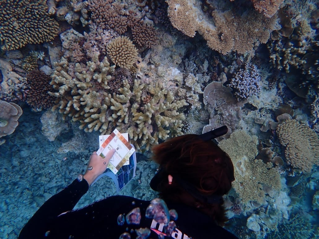 Reef Facts 39 Reef Education Marine Bio Lady Musgrave Experience Great Barrier Reef