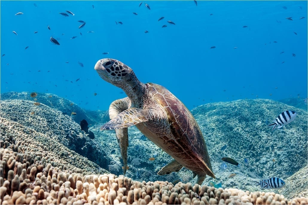lady musgrave island turtle tours