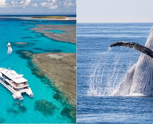 reef whale tours great barrier reef