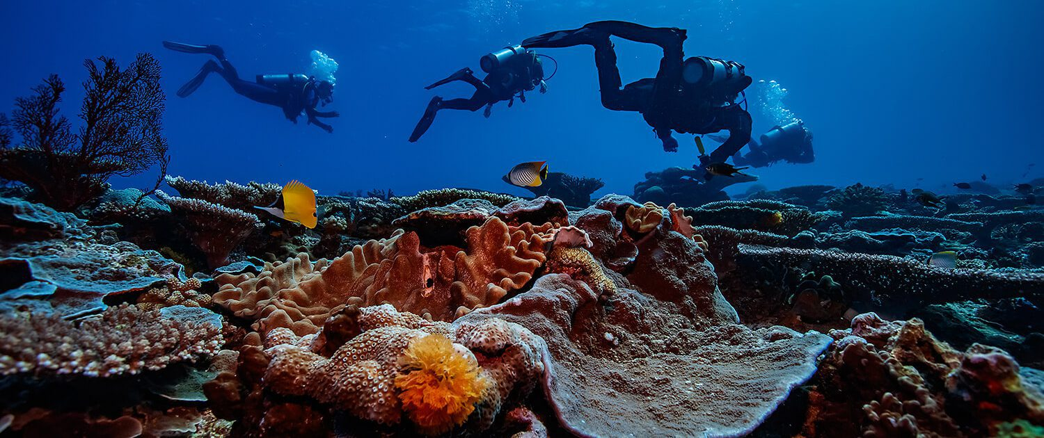 Dive Courses Great Barrier Reef Lady Musgrave Island - Learn To Dive, Lady Musgrave Island