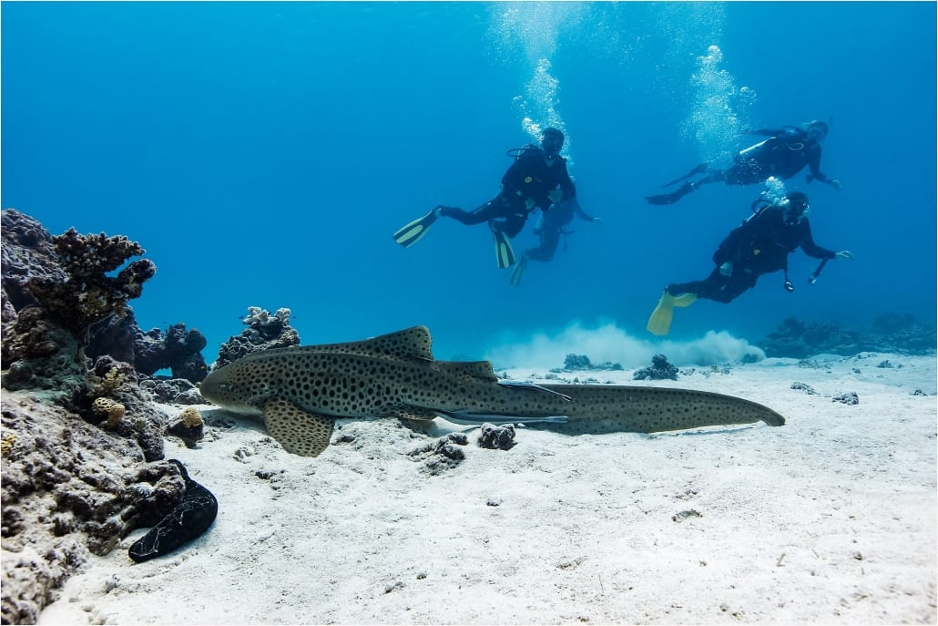 Learn To Dive Bundaberg Region - Scuba Diving Lessons Southern Great Barrier Reef