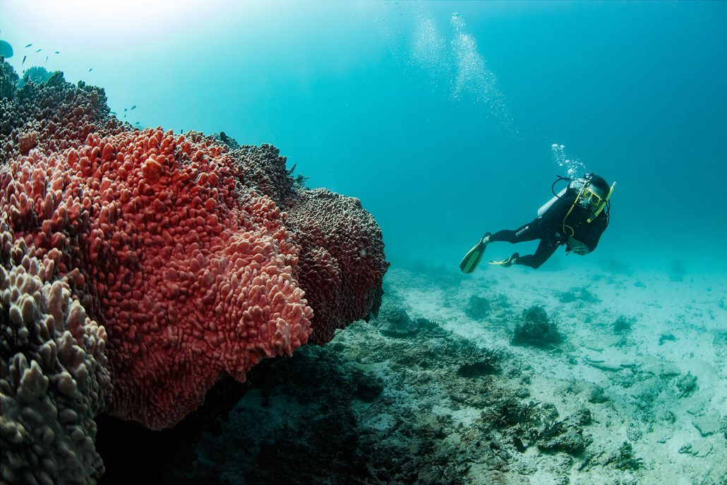 Scuba Diving Lessons Great Barrier Reef, Padi Dive Courses