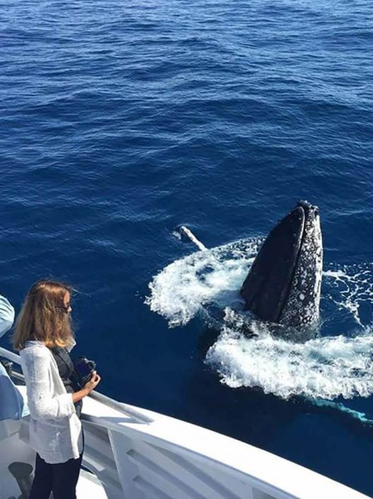 Whale Watching Day Tours Southern Great Barrier Reef